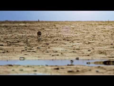 channeling-the-colorado-river-delta
