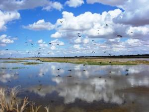 skybirds LR